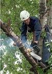 Кронирование деревьев.