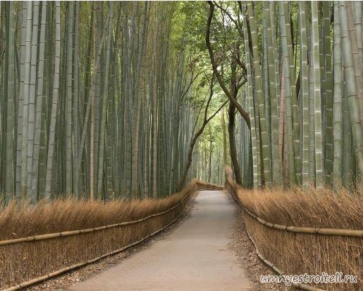 В сё про бамбуковые обои