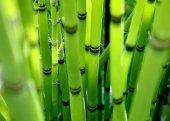 Отделка бамбуком. Декор помещения бамбуком.