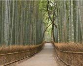 Всё про бамбуковые обои.