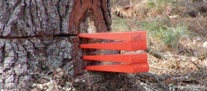 Валка деревьев частями своими руками