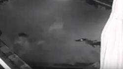 Крокодил напал на девушку в бассейне. Съёмка камерой наблюдения.