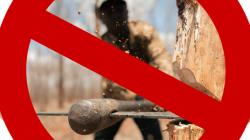 Видео - Бесстрашное спиливание дерева.