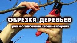 Обрезка деревьев в ДНР